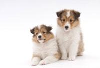 2匹の仔犬
