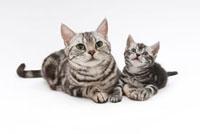 猫の親子 02322005211| 写真素材・ストックフォト・画像・イラスト素材|アマナイメージズ