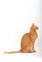 横を向いて座っている猫