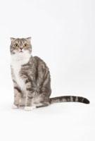座っている猫 02322005304| 写真素材・ストックフォト・画像・イラスト素材|アマナイメージズ