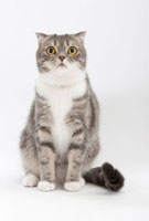 座っている猫 02322005305| 写真素材・ストックフォト・画像・イラスト素材|アマナイメージズ