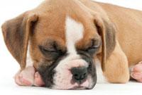 寝ている仔犬