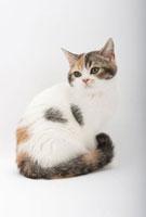 座って振り向いている仔猫 02322005451| 写真素材・ストックフォト・画像・イラスト素材|アマナイメージズ