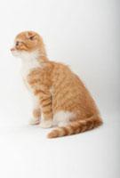 横を向いて座っている仔猫