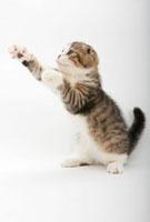 立ち上がって前足を伸ばしている仔猫