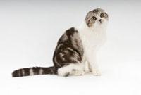 座っている猫 02322005461| 写真素材・ストックフォト・画像・イラスト素材|アマナイメージズ