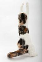 立ち上がって前足を伸ばしている猫