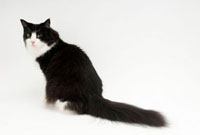 座って振り向いている猫