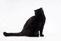 座っている猫 02322005695| 写真素材・ストックフォト・画像・イラスト素材|アマナイメージズ