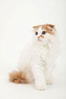 座って横を向いている猫 02322005699| 写真素材・ストックフォト・画像・イラスト素材|アマナイメージズ