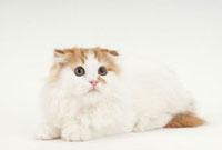 伏せている猫 02322005703| 写真素材・ストックフォト・画像・イラスト素材|アマナイメージズ