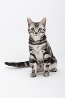 座っている猫 02322005750| 写真素材・ストックフォト・画像・イラスト素材|アマナイメージズ