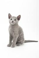 座っている仔猫 02322005938| 写真素材・ストックフォト・画像・イラスト素材|アマナイメージズ