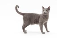 立っている猫 02322006037| 写真素材・ストックフォト・画像・イラスト素材|アマナイメージズ
