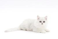 横を向いて伏せている仔猫 02322006313| 写真素材・ストックフォト・画像・イラスト素材|アマナイメージズ