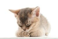 寝ている仔猫 02322006420| 写真素材・ストックフォト・画像・イラスト素材|アマナイメージズ