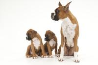 犬の親子 02322006551| 写真素材・ストックフォト・画像・イラスト素材|アマナイメージズ