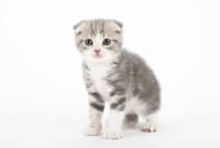 座っている仔猫 02322007073| 写真素材・ストックフォト・画像・イラスト素材|アマナイメージズ