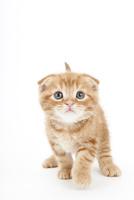 歩いている仔猫 02322007657| 写真素材・ストックフォト・画像・イラスト素材|アマナイメージズ