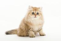 座っている仔猫 02322008076| 写真素材・ストックフォト・画像・イラスト素材|アマナイメージズ