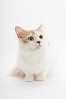 座っている猫 02322008119| 写真素材・ストックフォト・画像・イラスト素材|アマナイメージズ