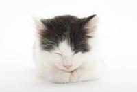 寝ている仔猫 02322008169| 写真素材・ストックフォト・画像・イラスト素材|アマナイメージズ