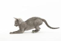 伏せている仔猫 02322008272| 写真素材・ストックフォト・画像・イラスト素材|アマナイメージズ