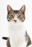 座っている猫 02322008671| 写真素材・ストックフォト・画像・イラスト素材|アマナイメージズ