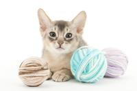 毛糸と仔猫