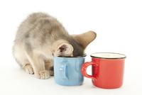 カップをのぞく仔猫