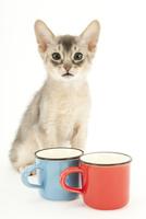 カップと仔猫