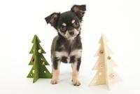 クリスマスツリーと仔犬