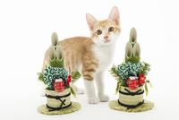門松と仔猫 02322008974| 写真素材・ストックフォト・画像・イラスト素材|アマナイメージズ
