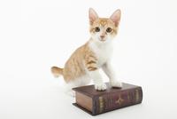 本と仔猫 02322008976| 写真素材・ストックフォト・画像・イラスト素材|アマナイメージズ