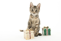 プレゼントと仔猫 02322008979| 写真素材・ストックフォト・画像・イラスト素材|アマナイメージズ