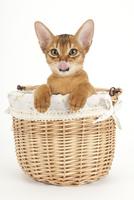 かごに入った猫
