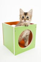 箱に入った仔猫 02322009016| 写真素材・ストックフォト・画像・イラスト素材|アマナイメージズ