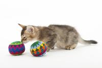 ボールで遊ぶ仔猫