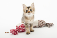 プレゼントと仔猫 02322009019| 写真素材・ストックフォト・画像・イラスト素材|アマナイメージズ