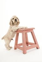 椅子と仔犬