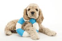 浮き輪と仔犬