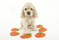 かぼちゃと仔犬