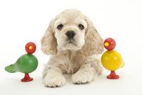 おもちゃと仔犬