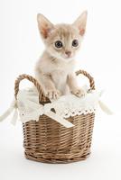 かごに入った仔猫