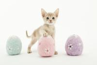 イースターエッグと仔猫 02322009054| 写真素材・ストックフォト・画像・イラスト素材|アマナイメージズ