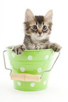 バケツに入った仔猫 02322009057| 写真素材・ストックフォト・画像・イラスト素材|アマナイメージズ