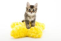 クッションと仔猫 02322009058| 写真素材・ストックフォト・画像・イラスト素材|アマナイメージズ