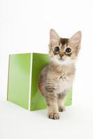 箱に入った仔猫 02322009064| 写真素材・ストックフォト・画像・イラスト素材|アマナイメージズ