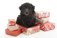 箱で遊ぶ仔犬