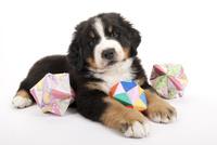 折り紙と仔犬